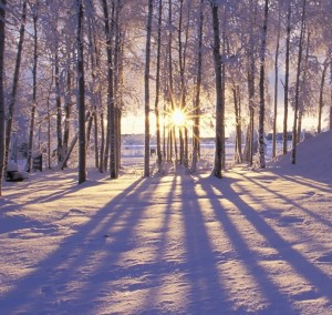 winter-photo-wallpaper_1920x1200_87794